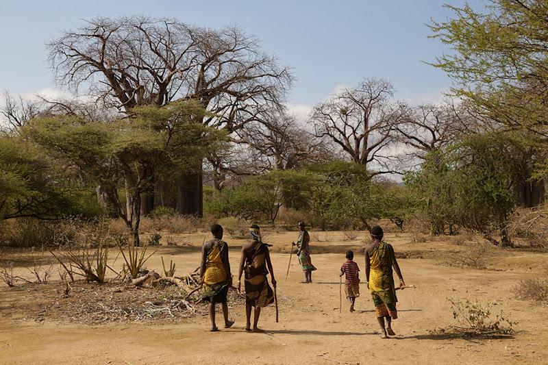 Sulla strada dei Baobab di David Marrone