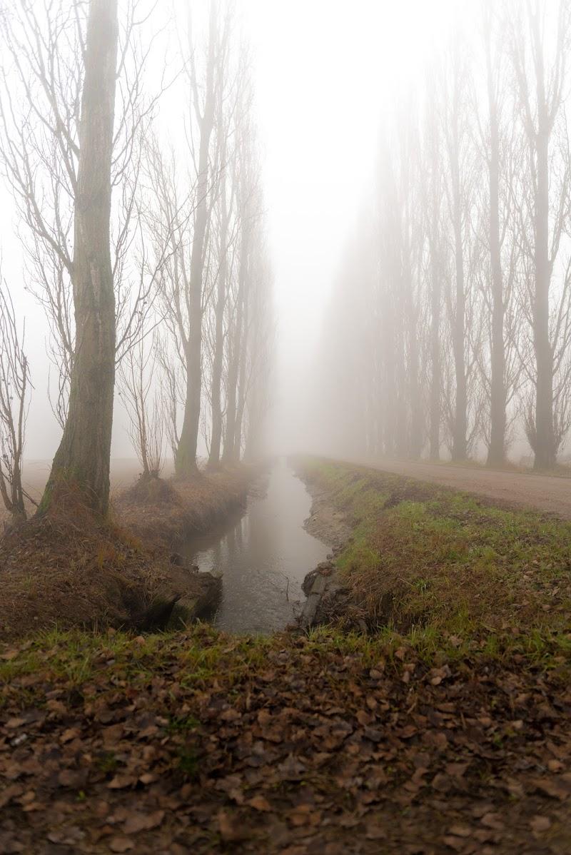 Nebbia in Val Padana  di debho_jo