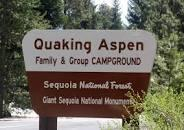Image result for quaking aspen campground