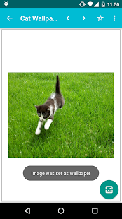 Cat Wallpapers!- screenshot thumbnail
