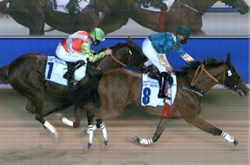 Saltarín Dubai conserva el coraje y dio pelea de principio a fin en Meydan