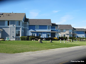 Photo: (Year 2) Day 331 - Some of the Houses on the Way in to Sidney