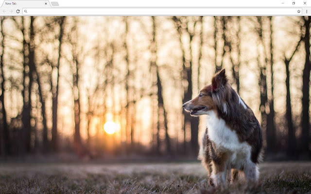 Dogs And Puppies New Tab & Themes