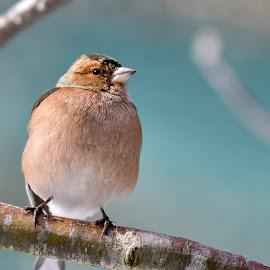 bird on the branch by Marjan Gresl - Uncategorized All Uncategorized