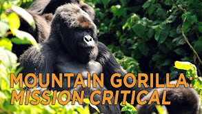Mountain Gorilla: Mission Critical thumbnail