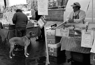 Photo: En jättehungrig Boxer  NYC feb 09