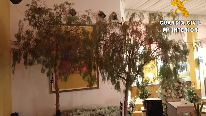 Los árboles especieros que se talaron y son propiedad del Ayuntamiento de Benahadux.