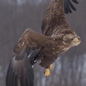 Looking at You by Chris Wangard - Animals Birds