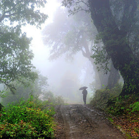 In search of eternal destiny  by Sayan Bhattacharya - Landscapes Forests ( nature, places, landscape )