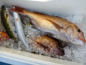 """Photo: """"ムライさん""""の釣果です。 このシブい中、真鯛、アカイサキ、ムロアジ・・・でした。"""