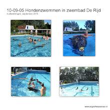 Photo: Hondenzwemmen in een echt zwembad met Branco, Aiki, Khes, Hector, Bajka, Sifra, Dreamy en Dumaj