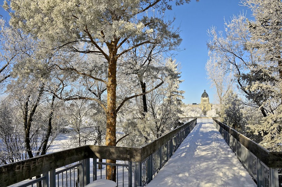 Frost in Park by Gary Weisbrodt - City,  Street & Park  City Parks