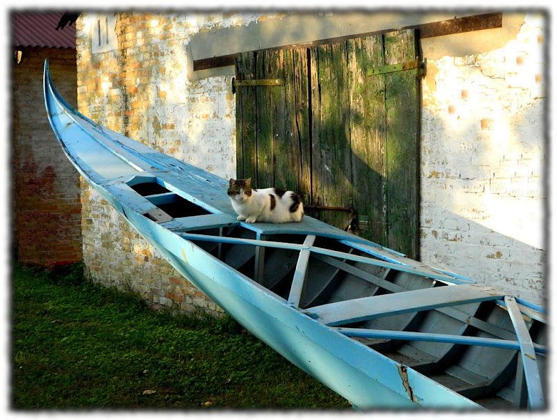 Il gatto gondoliere di lucaldera