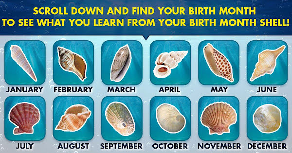 What Does Your Birth Month Shell Say About You Playbrain
