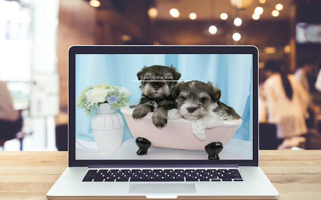Miniature Schnauzers HD Wallpapers Dog Theme