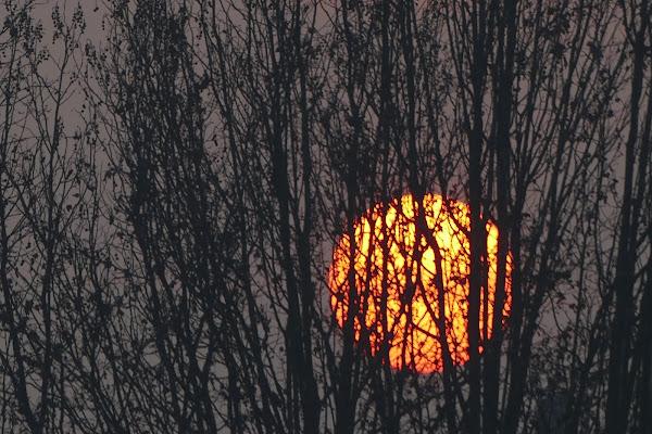 Timido sole di viola94
