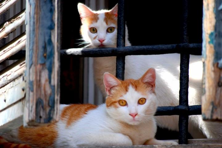 Amici alla finestra.... di Zerosedici