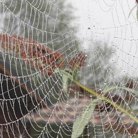 An autumn web  by Matt Gullick - Nature Up Close Webs ( , web, spiderweb )
