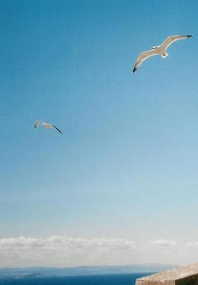 In volo di ildarita