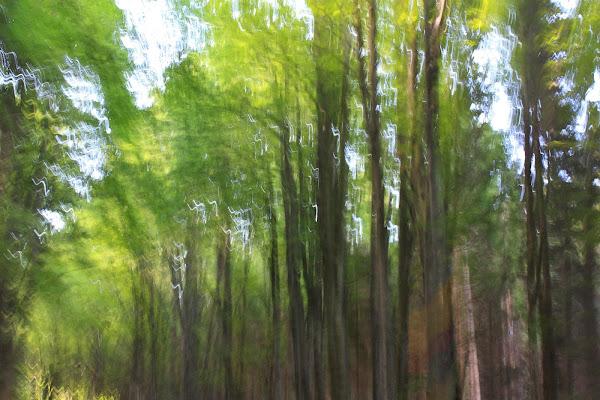 alberi  di Foxma