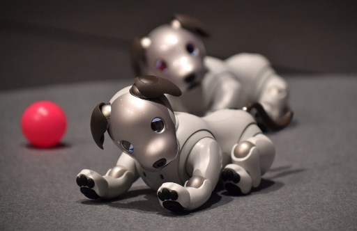 "Sony's latest entertainment robots ""aibo"" are displayed during a press preview at the company's headquarters in Tokyo on November 1, 2017."