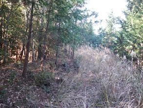 廃林道を進む