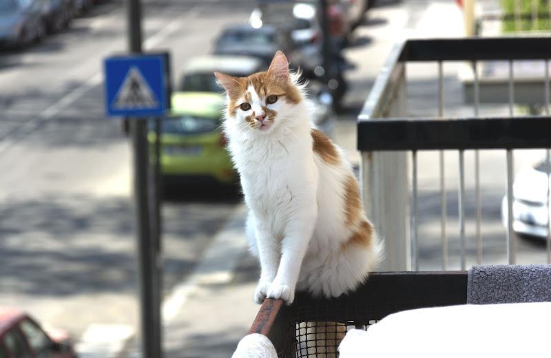 Equilibrio felino di F.O.
