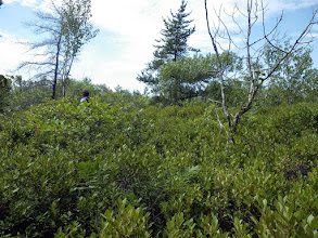 Photo: Bushwhacking territory - my shins wished I had heavy jeans on.