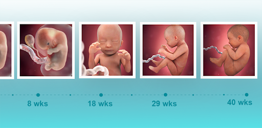 Pregnancy & Baby Daily Tracker app (apk) free download for Android/PC/Windows screenshot