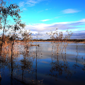 Mangroves at Banrock by Pamela Howard - Novices Only Landscapes ( water, clouds, mangroves, sky, blue, trees, still, scenery, riverland, banrock station )