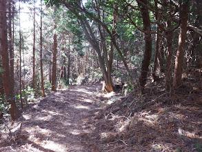 林道はここで下へ(中央に石仏)