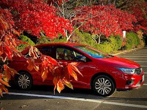 グレイス GM5 ハイブリッド EX 4WDのカスタム事例画像 Hikariさんの2020年11月04日20:36の投稿