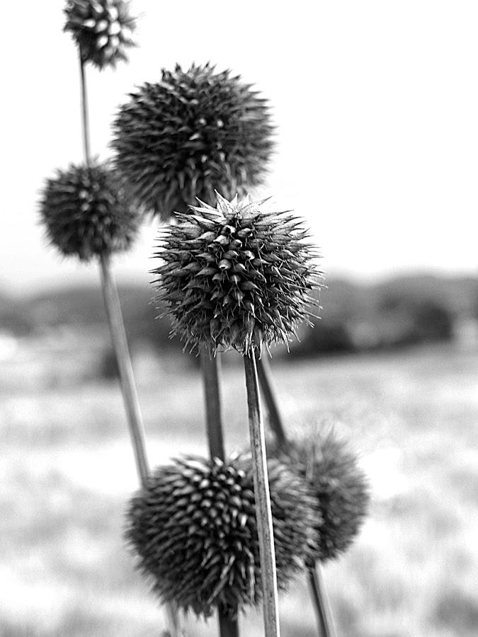 defense by Vanessa Lazzarini - Nature Up Close Flowers - 2011-2013 ( flower )
