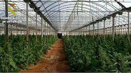 Vista del invernadero de Níjar donde se cultivaban 24.000 plantas de marihuana