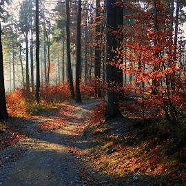 by Miroslava Winklerová - Nature Up Close Trees & Bushes (  )