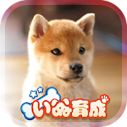 Shibainu Simulation Game 3D