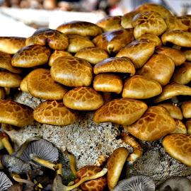 by Heather Aplin - Nature Up Close Mushrooms & Fungi