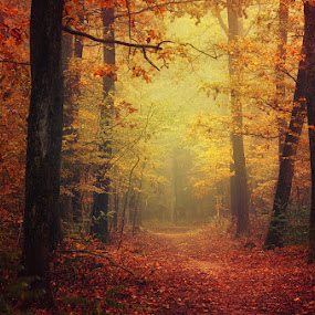 Autumn Walk XLII. by Zsolt Zsigmond - Landscapes Forests ( autumn, fog, foliage, fall, trees, forest, woods, colours, mist,  )