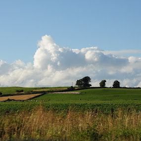 Summer fields by My 1st Impressions - Landscapes Prairies, Meadows & Fields ( clouds, scotland, green, trees, fields )