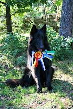 Photo: Estonian Junior Champion Black Vortex BELLA BRUTA (YOCHIMU Polaris x ALFA ALTESSE Dakota)
