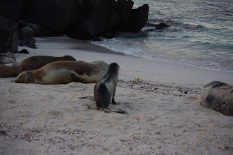 Photo: Sea Lion and Yellow Warbler
