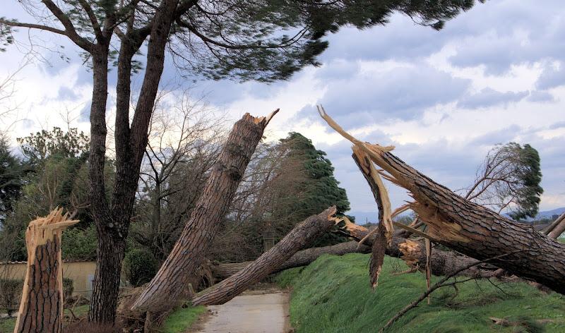 05/03/2015 il vento di ruggeri alessandro