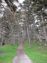 Photo: Walking around at Point Lobos State Reserve