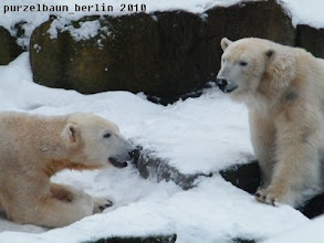 Photo: Knut flirtet zurueck ;-)