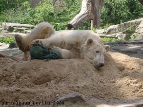 Photo: So liegt es sich auch angenehm, meint Knut ;-)