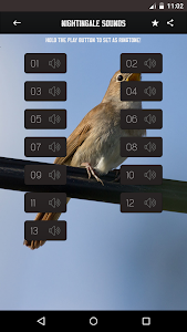 Nightingale Bird Sounds screenshot 0