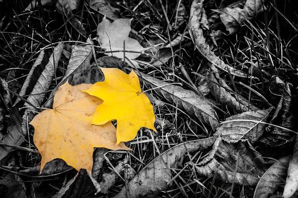 Il colore delle foglie d'autunno di Sony