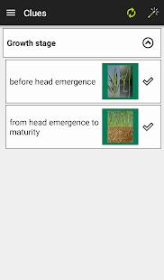 MyCrop Barley - náhled