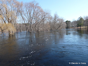 Photo: Downstream from Monument St.
