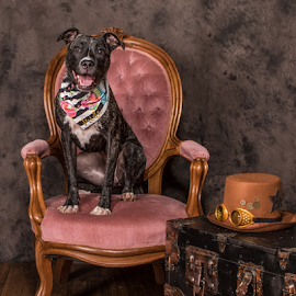 Please be seated! by Myra Brizendine Wilson - Animals - Dogs Portraits ( pets, victorian chair, canine, victorian, dog, dog in chair )